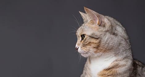 Ιστορίες με θέμα: Γάτες